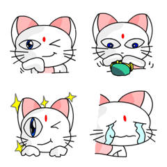 the cute cat01