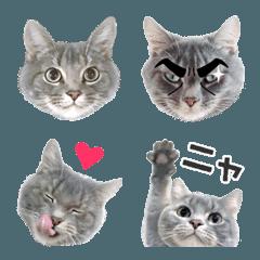 グレー猫トム(顔文字)