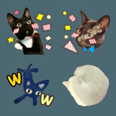 Emoji.cat