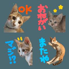 【とらじろう】俺のネコ絵文字