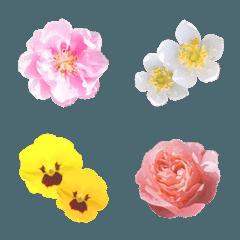 お花-Flower-