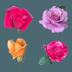 大人の文章に添える花々 ver.ローズ