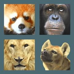 実写動物の絵文字2