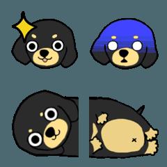 ブラックタンの子犬1