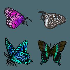 謎の蝶々たち 大人の女性の文章に添えて