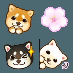 花よりわんこ(柴犬、桜、春)