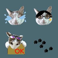 かわいい猫の絵文字スタンプ