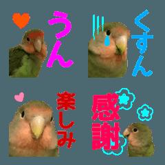 【小桜いんこ】ラッキー絵文字