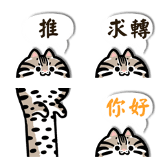 Cute Animal - Leopard Cat Text 2