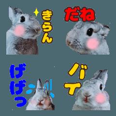 【うさぎ写真】使いやすい絵文字4
