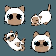 たぬシャム猫のミロ