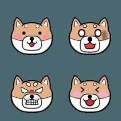 表情豊かな柴犬