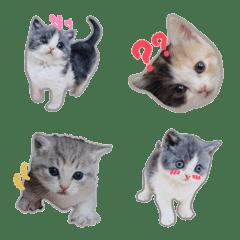 リアル子猫ちゃん