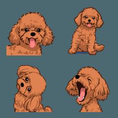 トイプードル(犬)