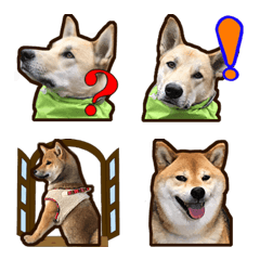 ミックス犬やと&柴犬こと 絵文字