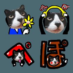 猫が教える国際信号旗 絵文字 実写版1.3