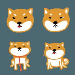 Shiba Inu Dog_A