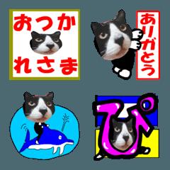 猫が教える国際信号旗 絵文字 実写版1.4