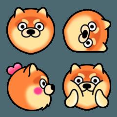 ohmyPET♡ ポメラニアン × オレンジ