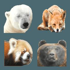 実写動物の絵文字