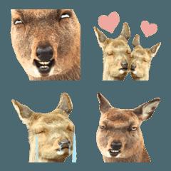 鹿しか絵文字