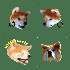秋田犬ひなたの絵文字