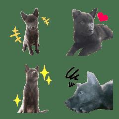 甲斐犬+オマケ