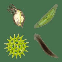 リアルな微生物の絵文字