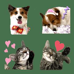 Jasmine Miao Miao Drifting Expressions 2