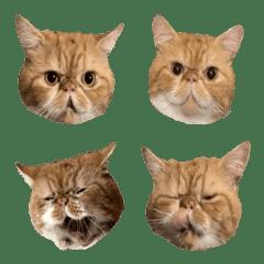 cufibi