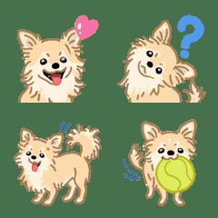 チワワ(犬)