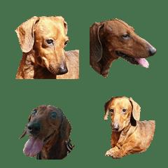 Kiwi-dog