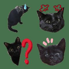 黒猫ひじきの写真絵文字