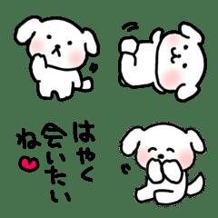 白い犬のぷくちゃん