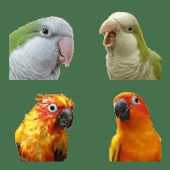 Happy parrots' emoji - Conures & Quaker