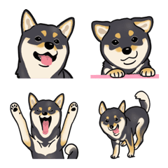 柴犬(犬)- 黒