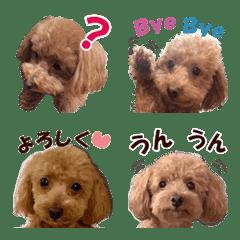 トイプードルのモコちゃん【絵文字】写真