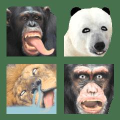 ウザい顔の動物の絵文字2