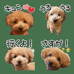 トイプードルのモコちゃん【絵文字2】写真