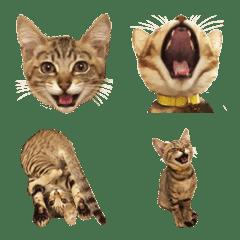 かわいいキジトラ猫【絵文字】
