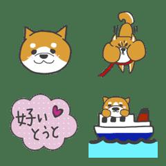 柴犬はちべえの島生活1