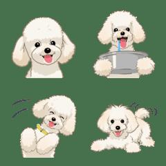 トイプードル(犬)-クリーム