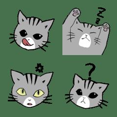 表情豊かな子猫
