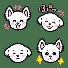 可愛い 白犬 チワマル ポメマル MIX犬