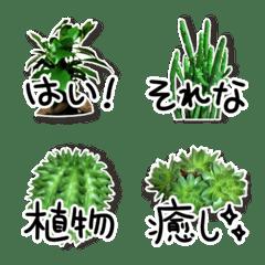 実写カワイイ♥️観葉植物