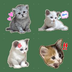 リアル子猫ちゃん 2