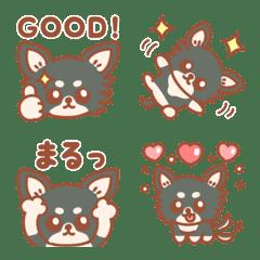 チビかわいい♡子犬のチワワ ロング&黒