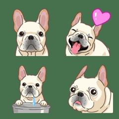 フレンチブルドッグ(犬)