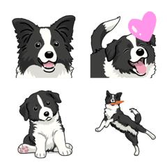 ボーダーコリー(犬)