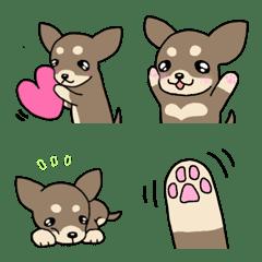 犬種別毎日使えるチョコタンチワワ絵文字